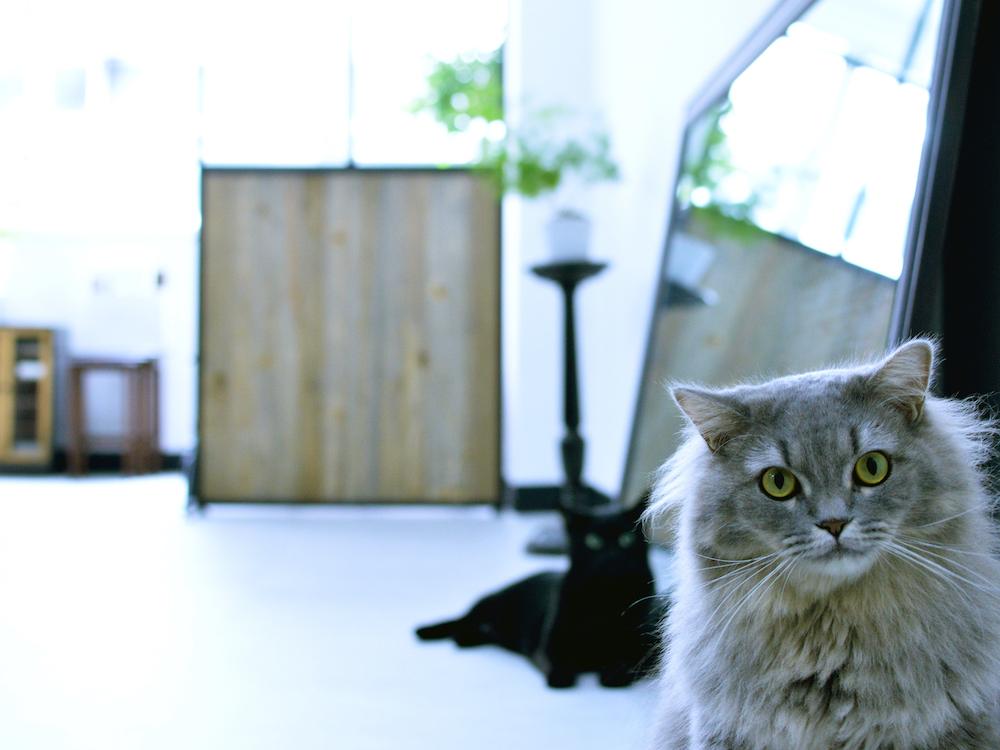 renri横浜の猫たち